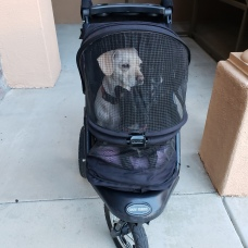 Puppies in stroller